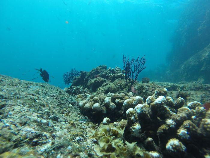 cabo adventures snorkeling