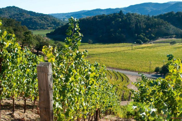 poetry vineyard