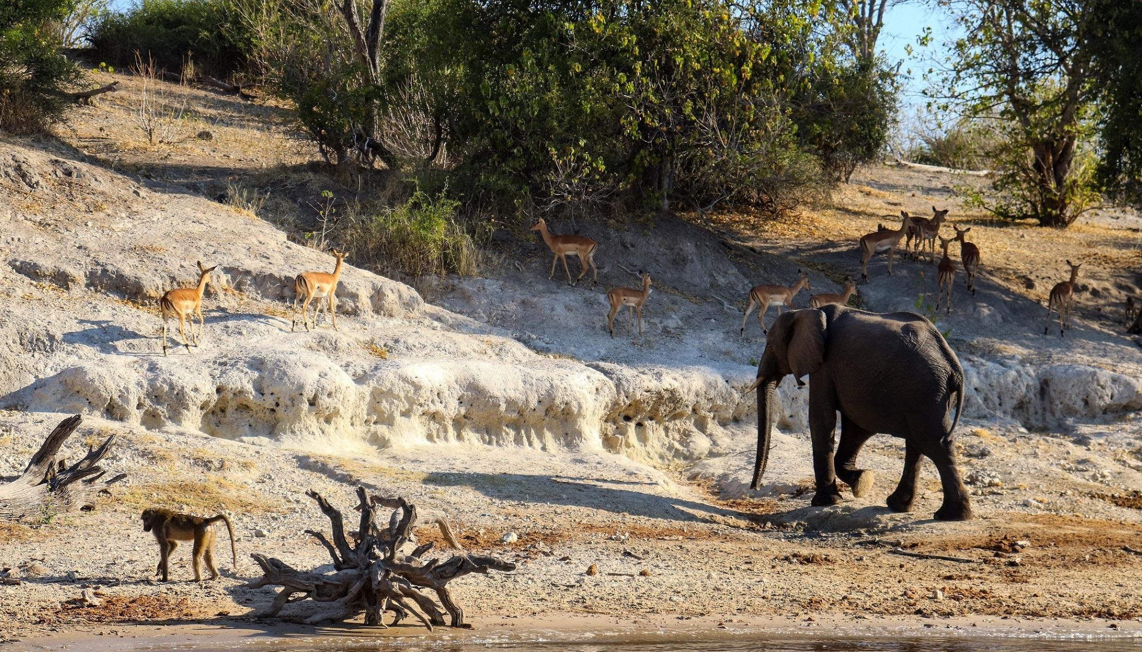 africa, chobe river, namibia, safari
