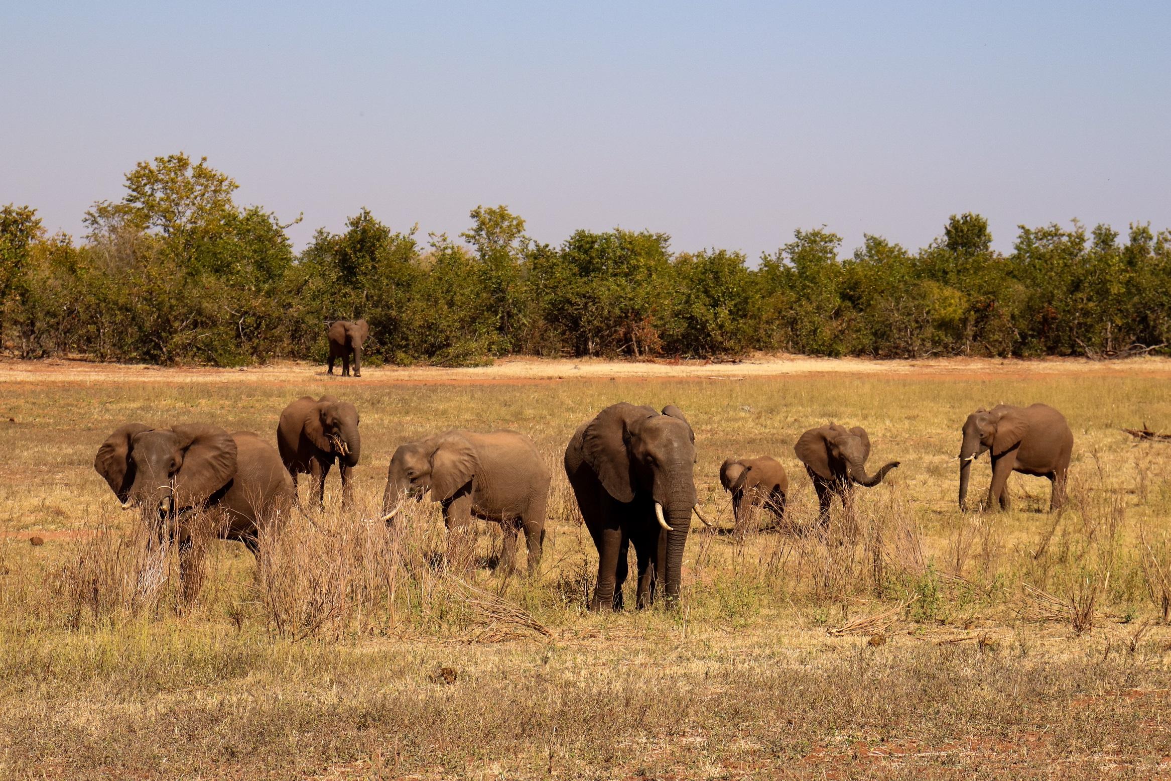 Matusadona National Park, safari, zimbabwe