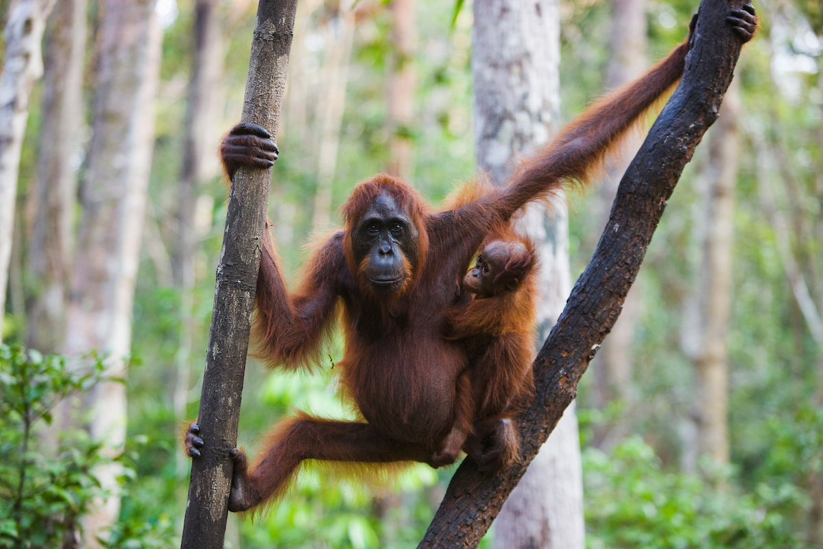 Wild Focus Expeditions, Indonesia, travel
