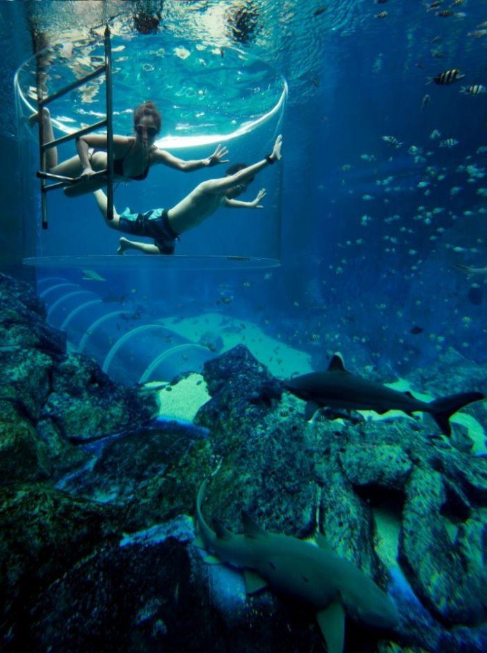 Essay On Marine Life
