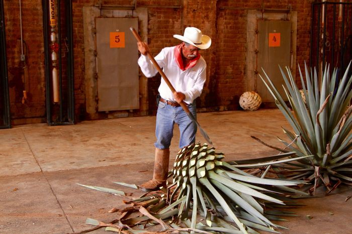 Agave preparation at Patron