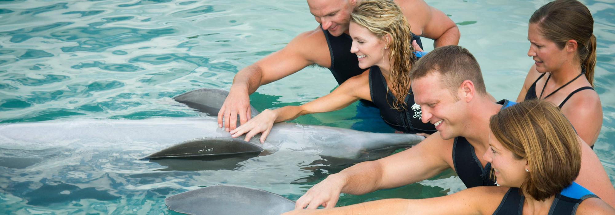 The Dolphin Connection at Hawks Cay Resort