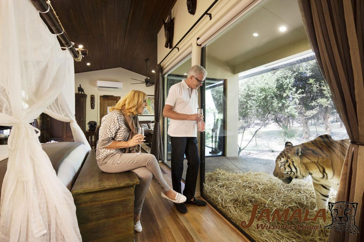 Go Glamping At Australia S Coolest Zoos