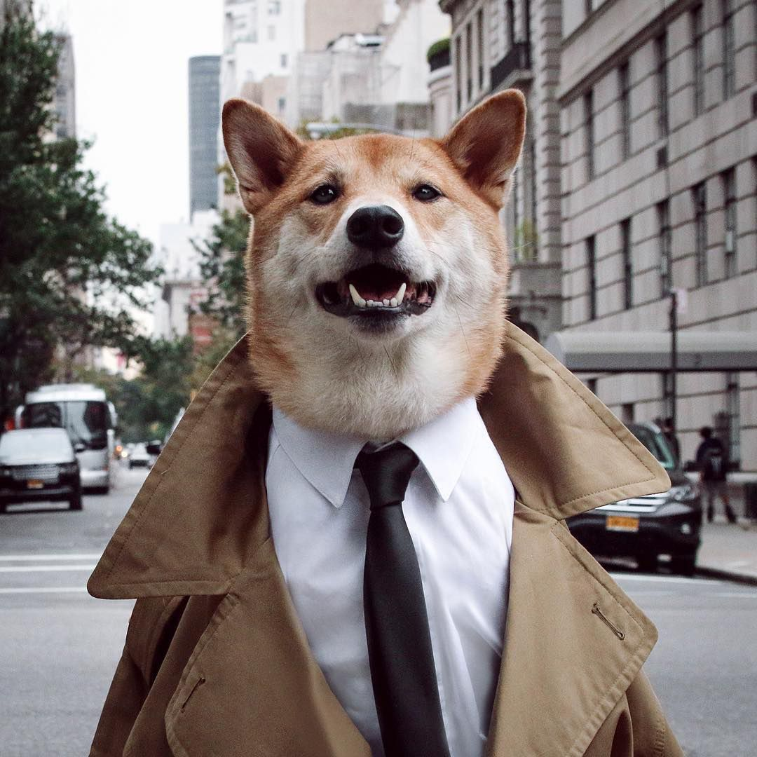 Hardest Working Pets in Fashion