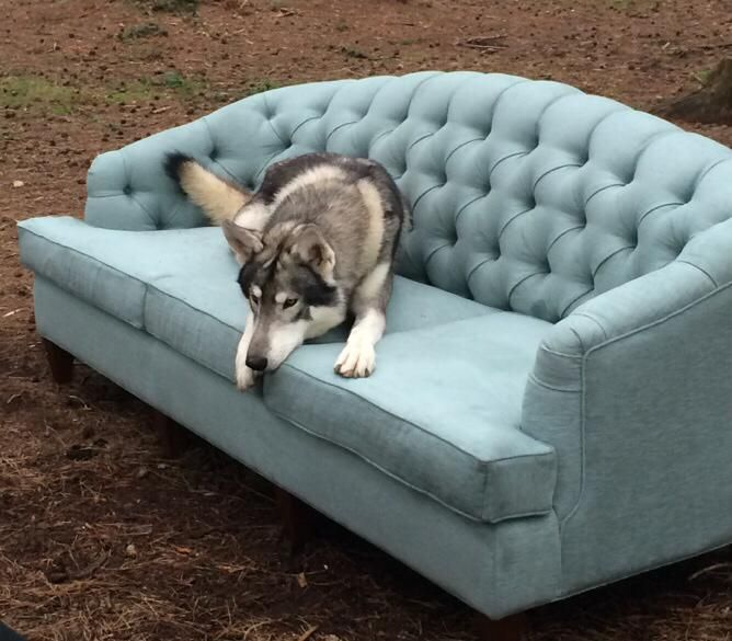 Coco Wolf, furniture