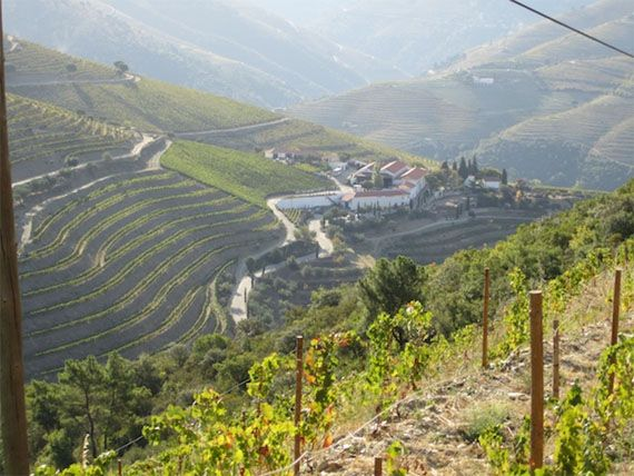 A view of the Douro Valley over Quinta Nova.