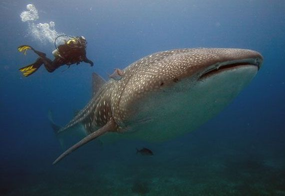 travel to the galapagos islands  ideal destination for scuba diving