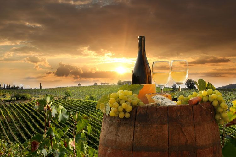 wine countryside