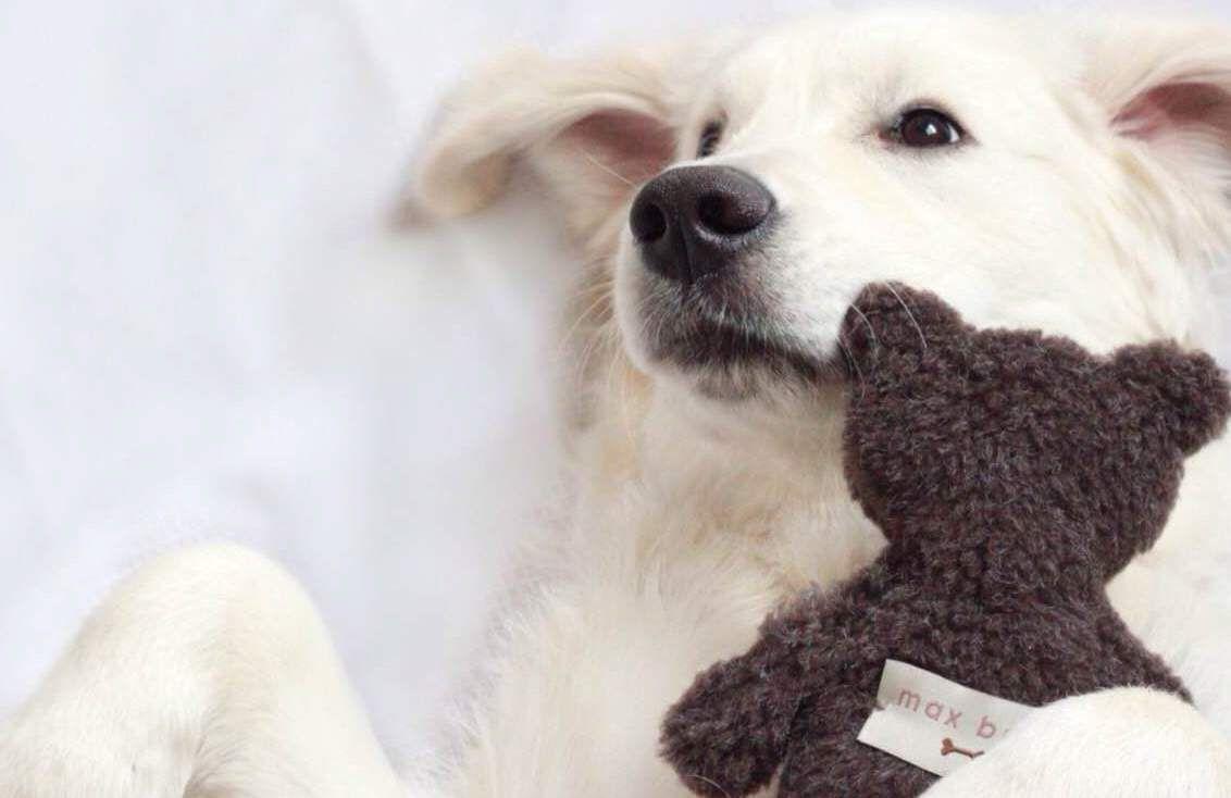 Max-Bone, dog clothes, dog toys, dog beds