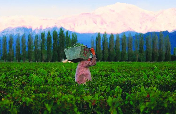 The Evolution Of Argentina S Mendoza Wine Country