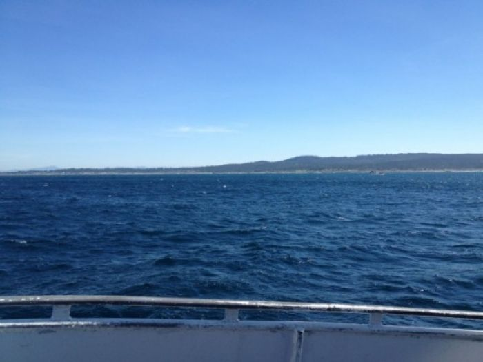 This is what gray whale watching pretty much looks like