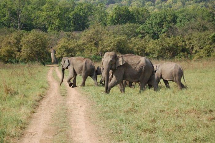 Elephant in Corbett National Park