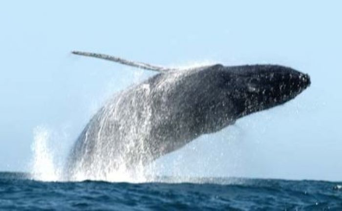 Cabo Whale Watching