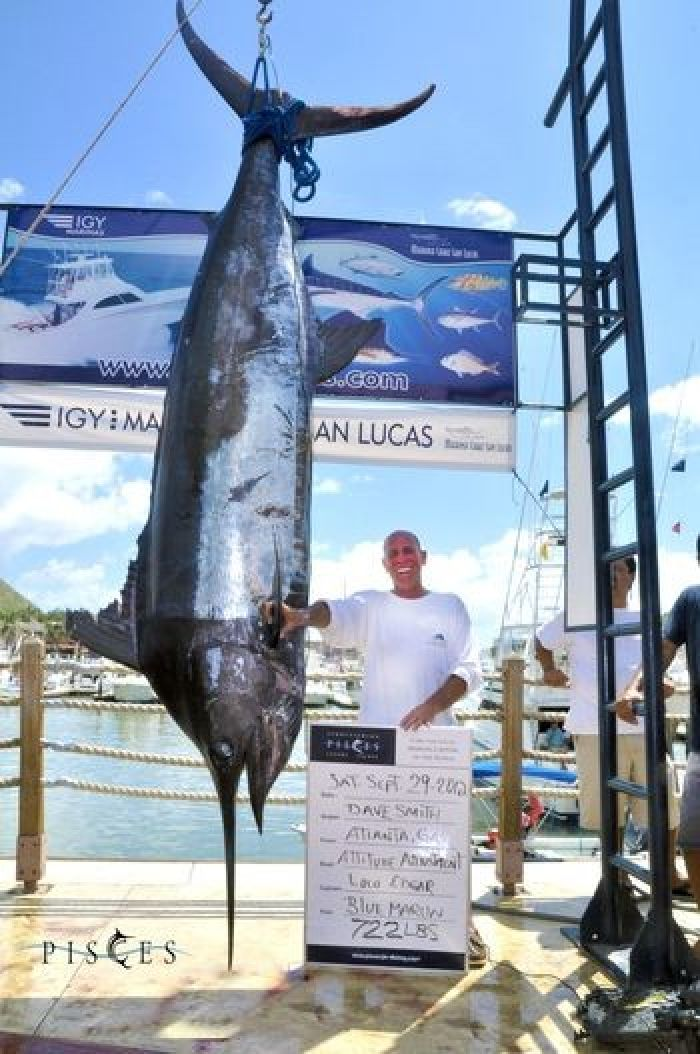 722-Pound Blue Marlin