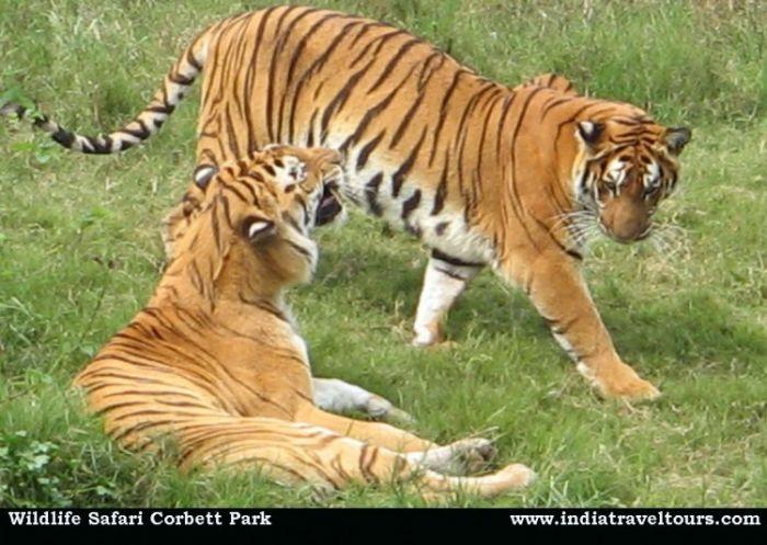 Wildlife Tour India