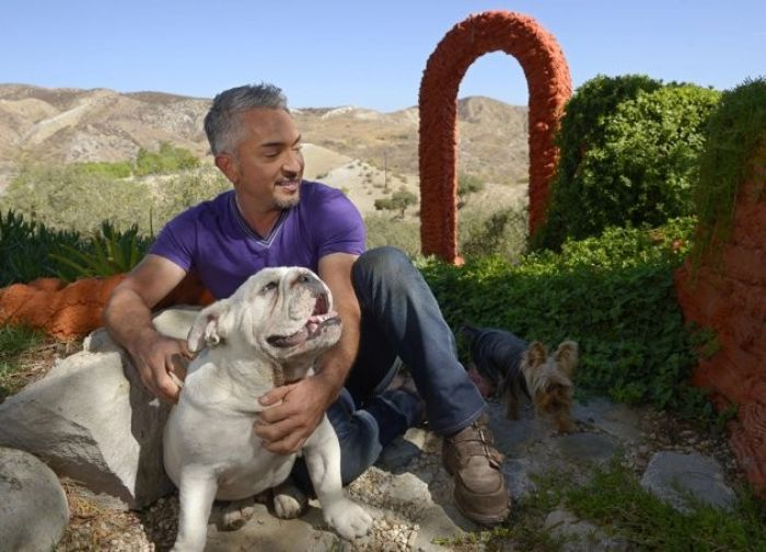 Millan and dogs