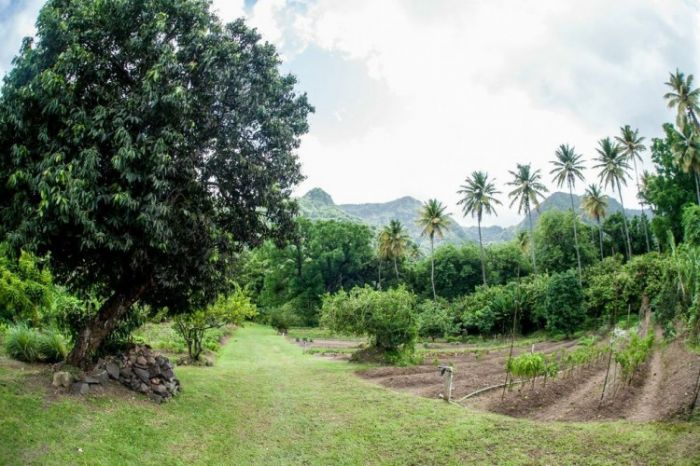 Emerald Estate Gardens