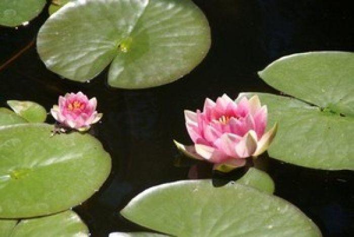 Lake Tahoe Gardens