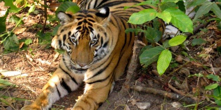 corbett-tiger-tour