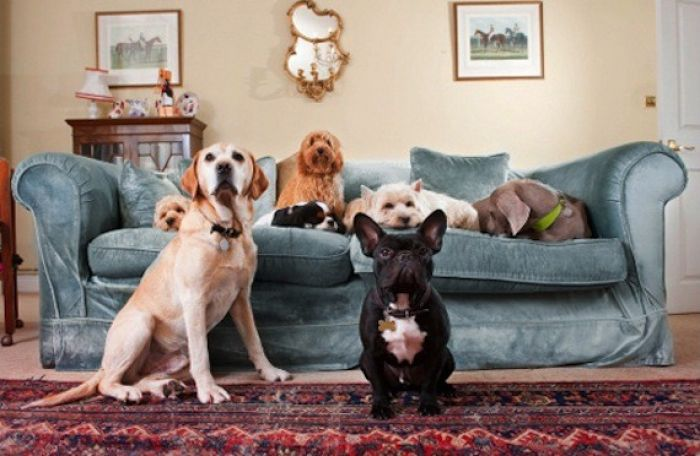 Canine collective at the House of Mutt