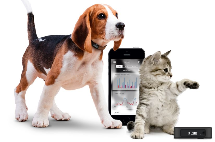 pet activity tracker
