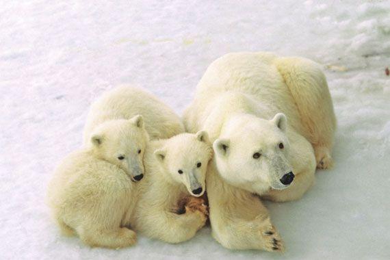 Churchill in Manitoba Canada Polar Bear Capital
