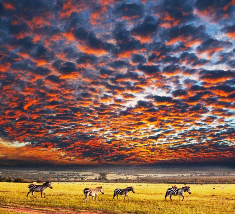 Zebra in Southern Africa