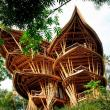 tree house, treehouse