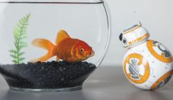 The BB-8 <i>Star Wars</i> Toy is Definitely the Droid You're Looking For