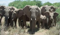 Wildlife Conservationists Come Together in New Efforts to save Endangered Elephant and Rhino Populations