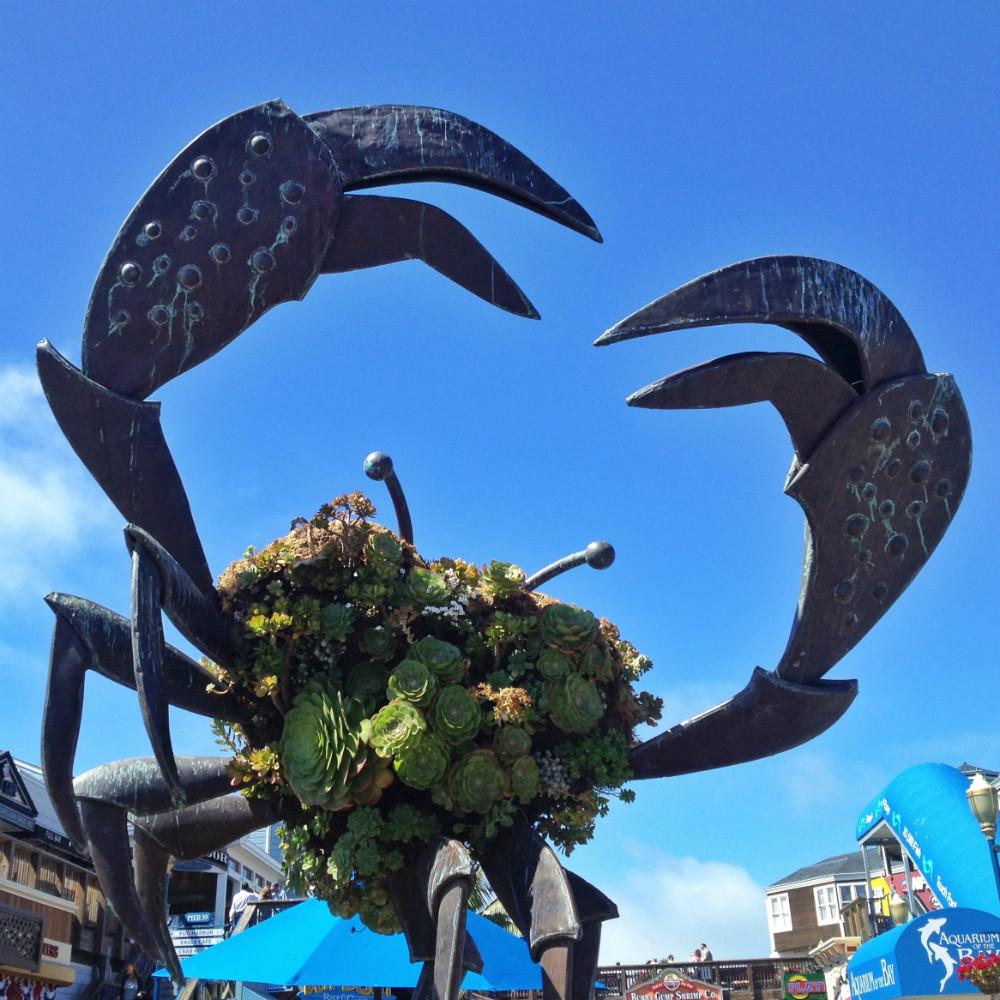 Pier 39 Crab