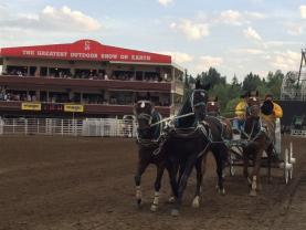 Play Out Your Cowboy Fantasies at Canada's Calgary Stampede