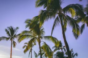 Only in Maui: Exclusive Activities on the Island