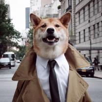 Meet 7 Successful Pets Racking Up a Ton of Money and Fame in the Fashion Industry