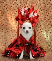 You Have to See This Puppy-Sized Recreation of Sarah Jessica Parker�s Met Gala Headdress