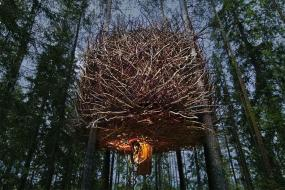 Sweden's Treehotel Totally Shakes Up the Classic Tree House Experience