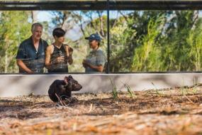 The World's Only Tasmanian Devil Encounter is a Heavenly Eco-Tourism Adventure