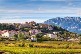 Visit the World's Top 5 Wine-Producing Regions With These Wine Tours