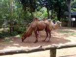 Colombo Zoological Gardens