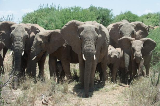 Elephant family photos, courtesy of Wildlife Conservation Socie