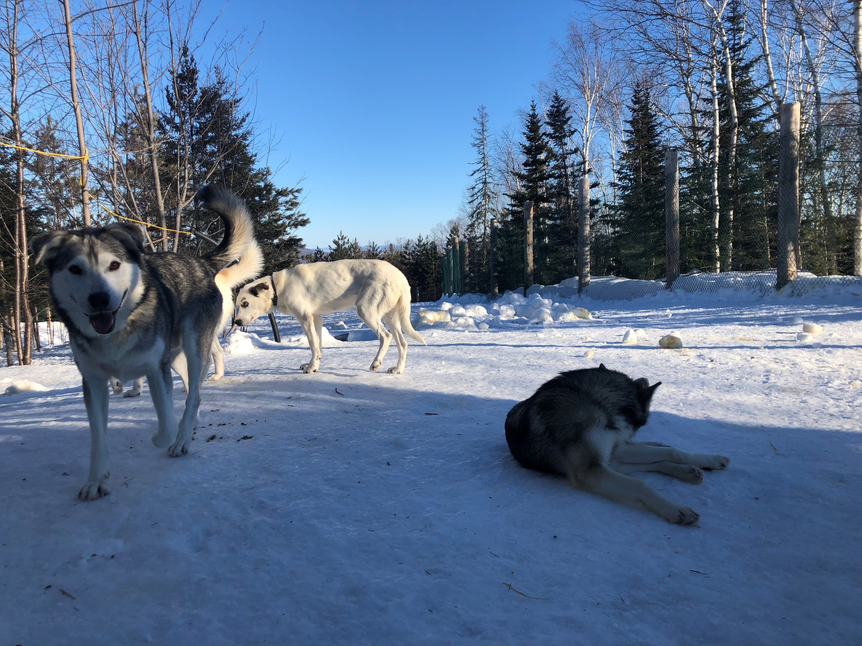 dog sledding, charlevoix, quebec, canada