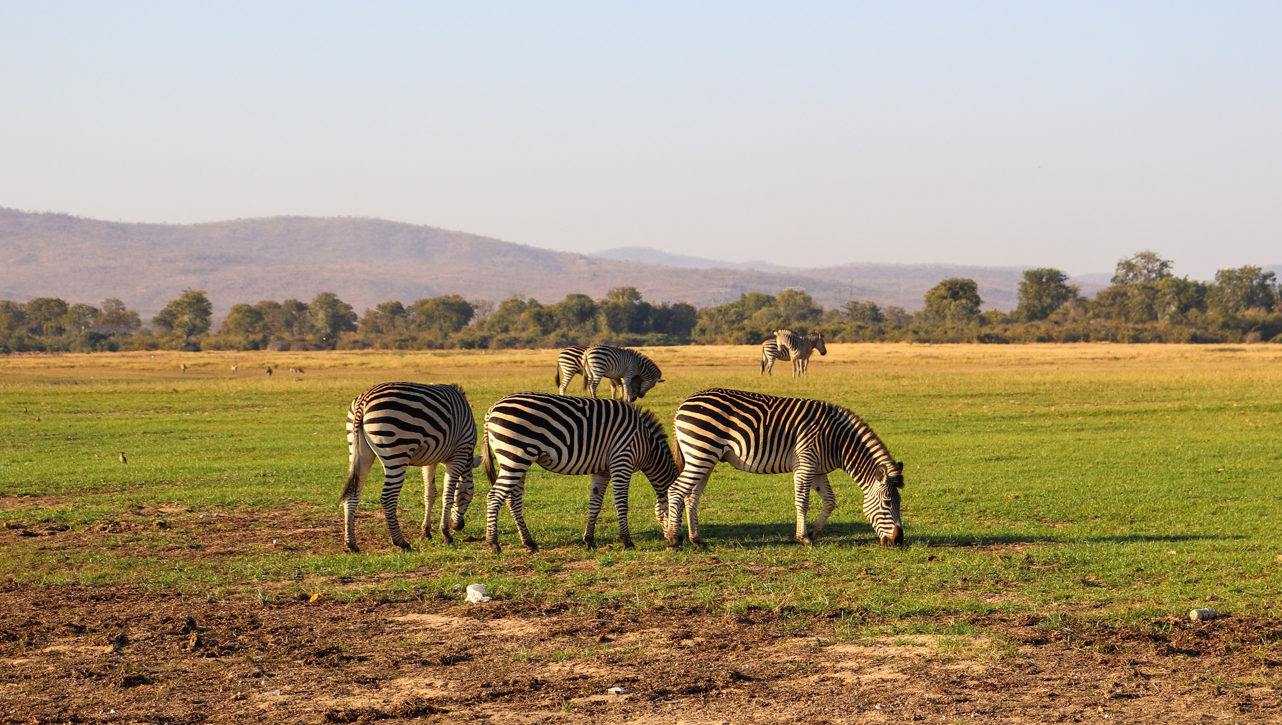 Matusadona National Park, safari, zimbabwe